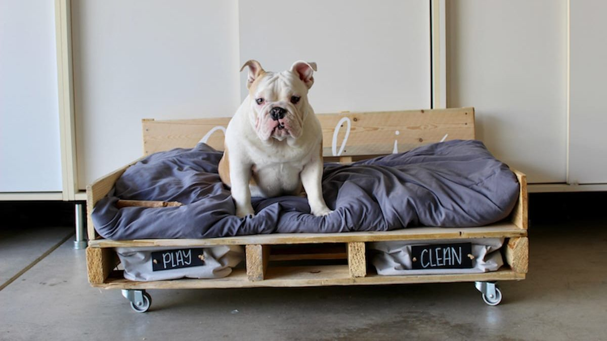 Projet DIY pour votre animal de compagnie.