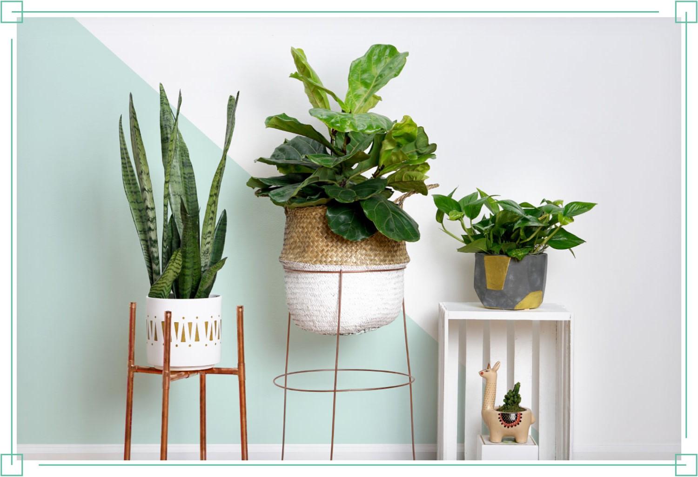 Bricolage miason sur Pinterest: trouvez des façons créatives d'organiser vos plantes.