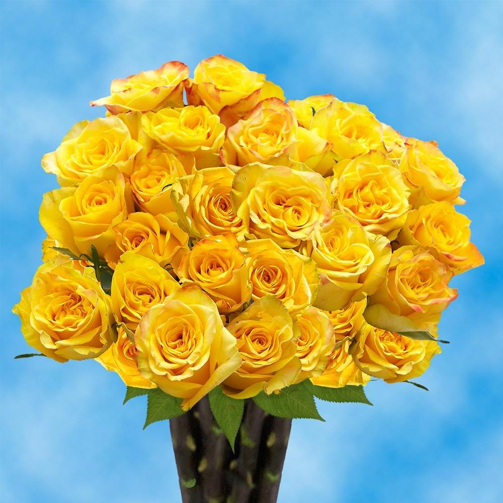 Les roses jaunes envoient un message de joie et d'attention.