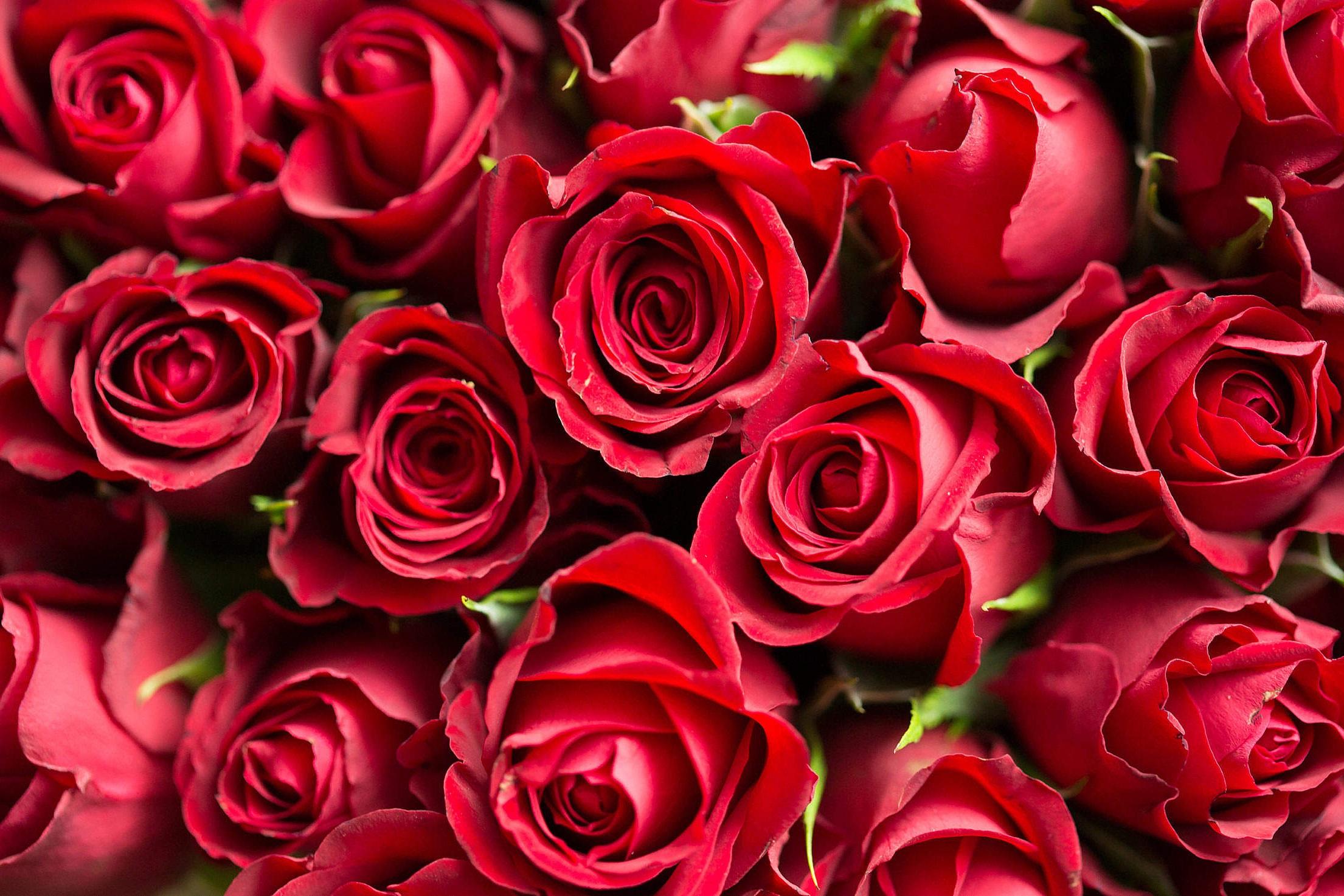 Bouquet de roses pour la Saint-Valentin.